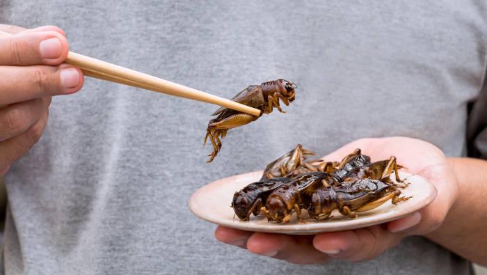 gegrillte Insekten - definitiv exotisches Essen